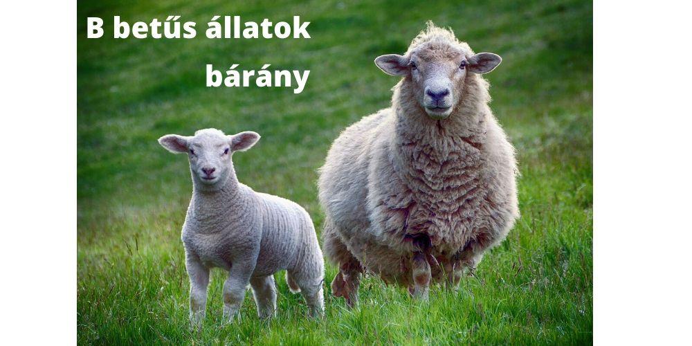 B betűs állatok