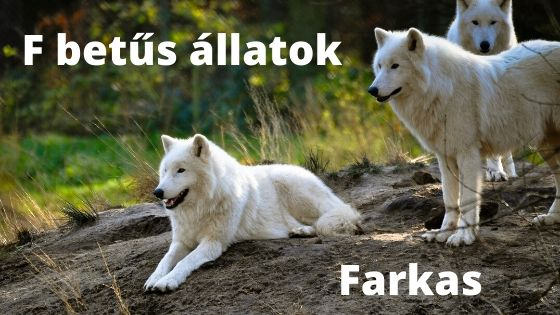F betűs állatok
