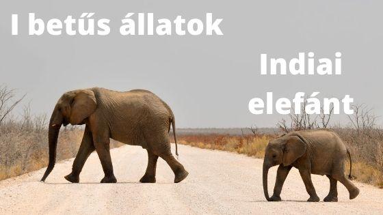 I betűs állatok