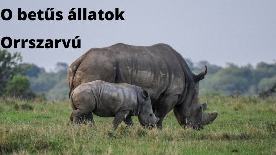 O betűs állatok